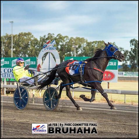 BRUHAHA, driven by Nathan Turnbull, won at the Parkes Trots
