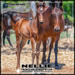 Franco Nelson filly out of Byjam