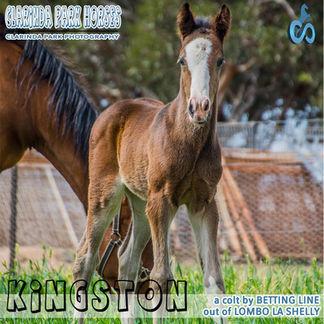 Horse Foals Photo 2018  - KINGSTON - a Bettingline colt out of Lombo La Shelly