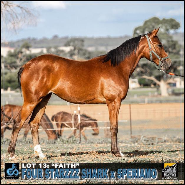 """Lot 13:  """"FAITH"""" (Bathurst Sale)"""