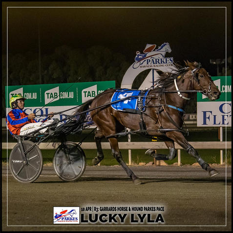 LUCKY LYLA, driven by Blake Micallef, won at the Parkes Trots