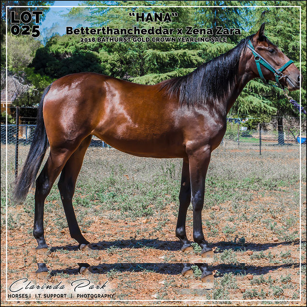 Bathurst Gold Crown 2018 Yearlings Sale - Lot 025 - HANA - Betterthancheddar x Zena Zara