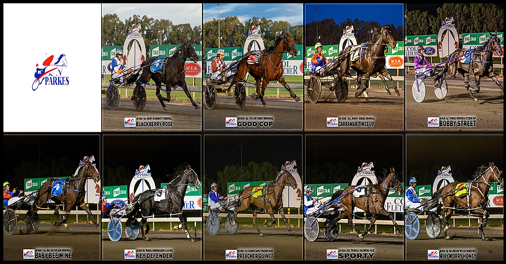 PARKES HARNESS - BLACKBERRY ROSE - GOOD COP - CARRAMAR TIMES UP - BOBBY STREET - BABY BEE MINE - KEY DEFENDER - PREACHER QUINCE - SPORTY - WHYWORRY HONEY