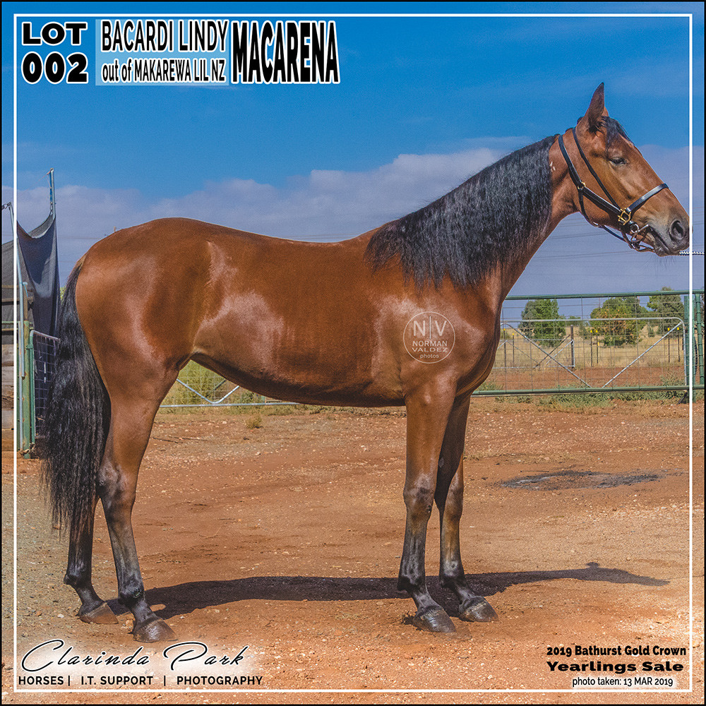 """""""Macarena"""", a filly by Bacardi Lindy out of Makarewa Lil. Lot 2 in 2019 Bathurst Gold Crown Yearlings Sale."""