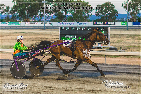 R4 TERRY BROTHERS CARPET COURT Pace - VOLATICUS - Amy Rees - 101