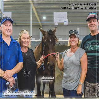 2019 Bathurst Gold Crown Yearlings Sale. Buttons with his new owners, the Bonds and the Morgans