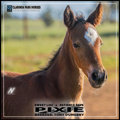 Sweet Lou filly out of Patience Pays