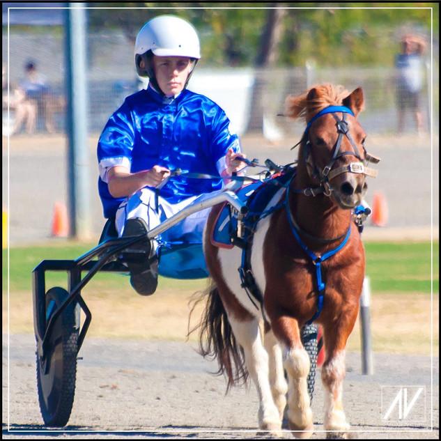 Retiring NSW Mini Trot Driver 2020   Sam Haslam