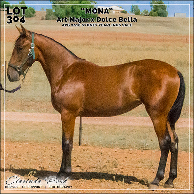 """APG 2018 Sydney Yearlings Sale - Lot 304 - """"MONA"""" - Art Major x Dolce Bella"""