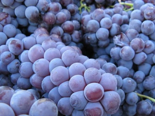 Qual è l'impatto dell' anidride solforosa nei vini?