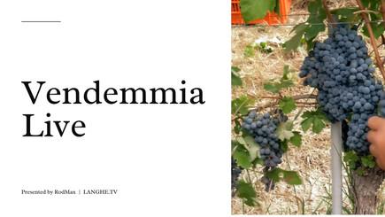 STORIE DI VENDEMMIA | Live