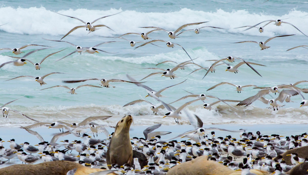 Seal and Seabirds