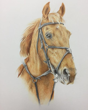 Loved drawing this horse Jock, given as