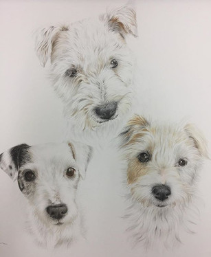 A trio of terriers 🐶 it's a family tree
