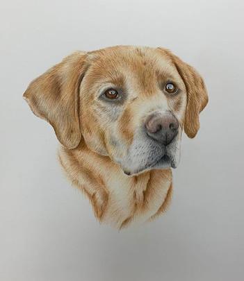 Murphy's final portrait 🐕 working on so