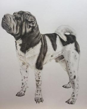Little Vinny's final pet portrait 💛 he