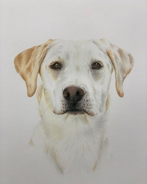 Mabel's finished pawtrait 🐾 and loved t