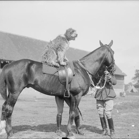 #Armistice100: What became of the war animals?