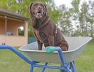 Trickdog.jpg