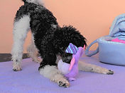 TrickdogKitzingerKHV.jpg