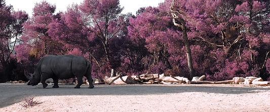 rhino_01.jpg