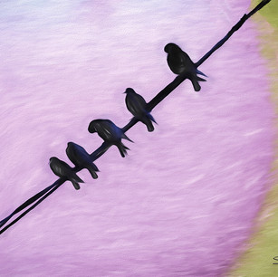 """""""Birds of TImes Square"""" NYC"""