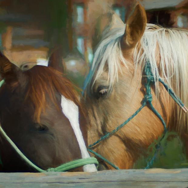 """Horse Play"" Wyoming"