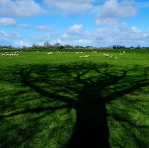 """""""Tree Shadows"""" Hoorn Holland"""