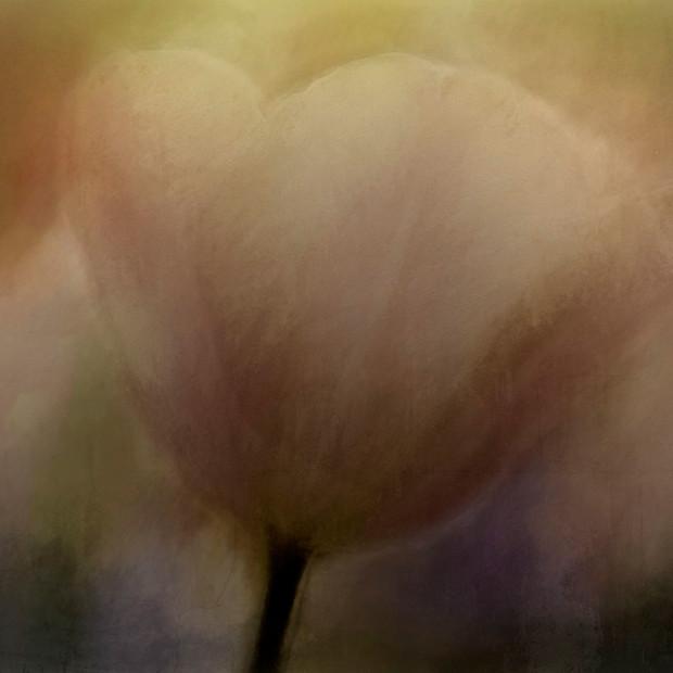 """""""Tulip Garden"""" Lisse Netherlands"""