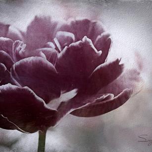 """""""Eloquent Flower"""" Hoorn Holland"""