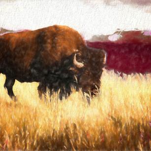 """""""Bison"""" Wyoming"""