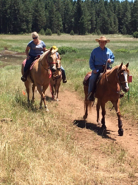 Nice Trail Horses...