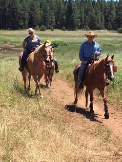 Nice Trail Horses...