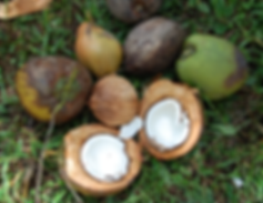 cocco-mix.png