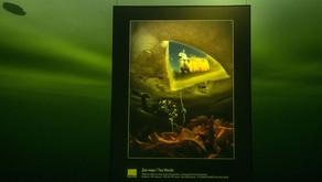 Галерея на дне Белого моря