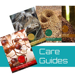 care guides.jpg