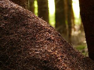 wood-ants-4194_1920.jpg