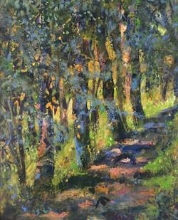 Early Autumn Woodland