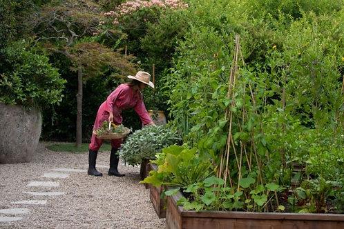 Herb Culinary & Medicine Garden