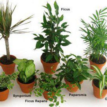 Plant Consultation 30min $20