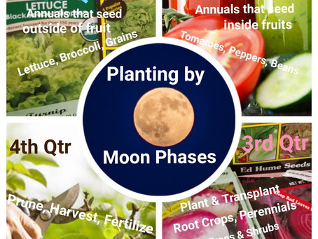 Planting with the Moon Phases