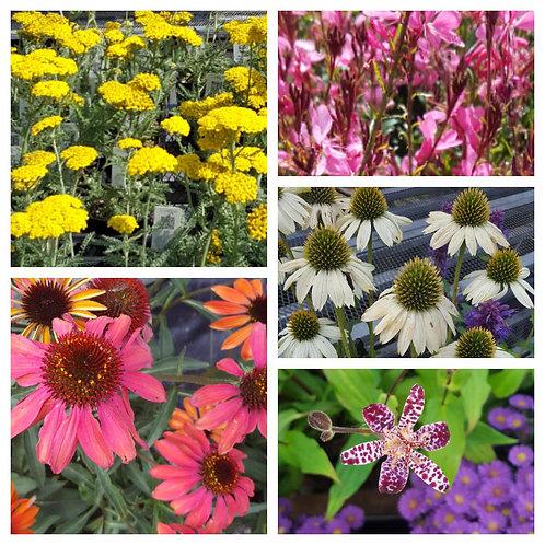 eBook-Create a Bee, Butterfly & Hummingbird Garden