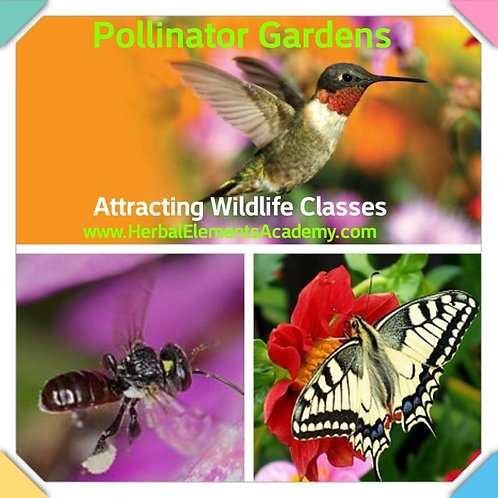 Attract Pollinators & Creating Wildlife Habitats