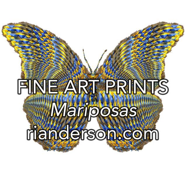 Fine Art Prints - Mariposas