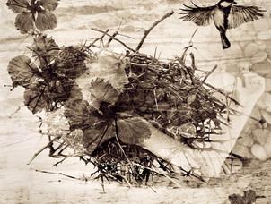 bird4.jpg