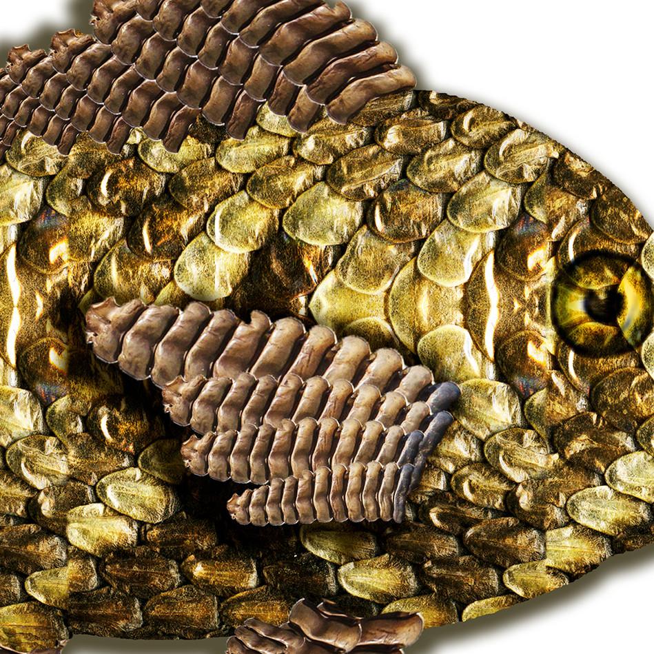 Detail, Pisces