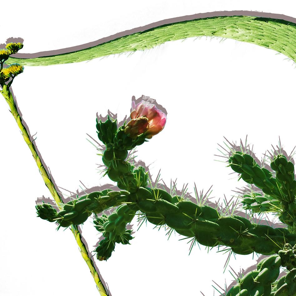 Detail, Sagittarius