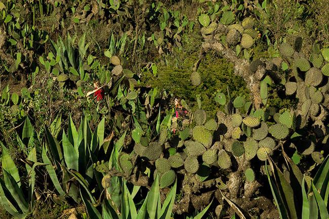 Bosque de cactus/Cactí Forest