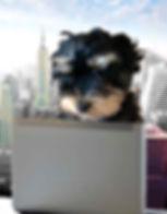 New York consultantflat.jpg