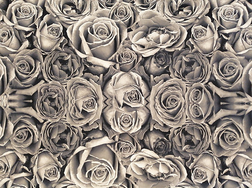 Sepia Roses Display Model Wall Covering